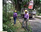 Tan Huan Arboriculture Services Photos