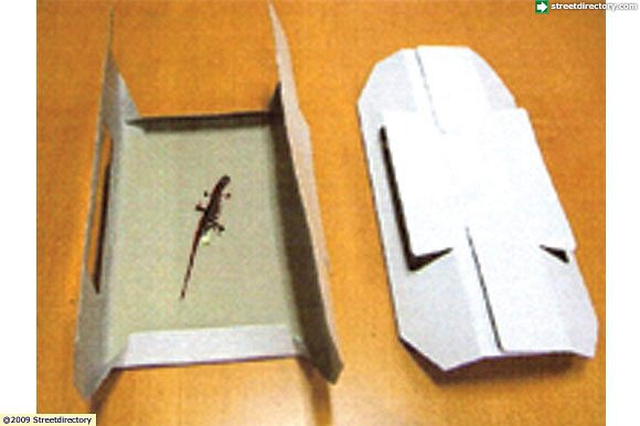 Insect Glue Trap