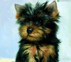 Gen Pet Stylist Pte Ltd Photos