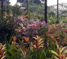 Corona Florist & Nursery Pte Ltd Photos
