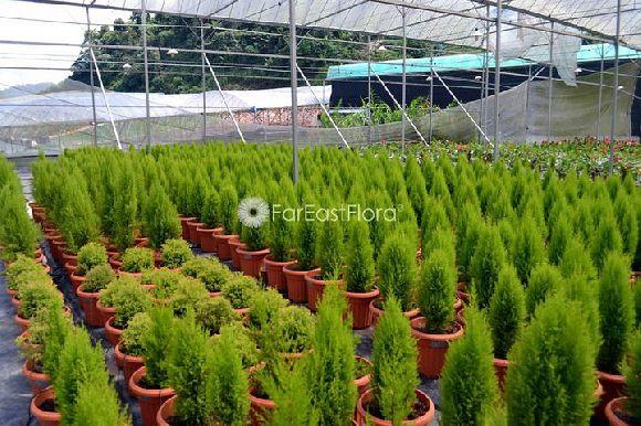 Far East Flora.Com Pte Ltd (Hands-On House (HortPark))