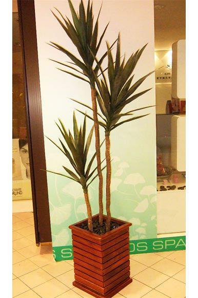 Yuca Plant abt 183 cm Tall (Large)