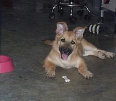 Masmasgroomers Pet Grooming Centre Pte Ltd Photos