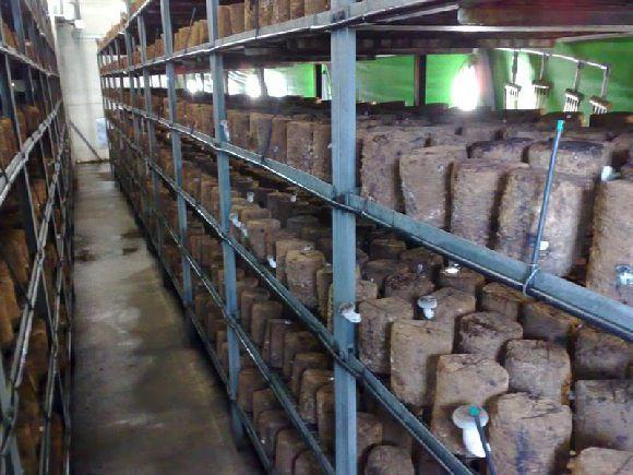 Mushroom Farm Interior