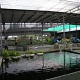 Mainland Tropical Fish Farm (Mainland Tropical Fish Farm)