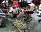 The Live Turtle & Tortoise Museum Photos