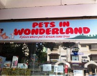 Pets In Wonderland Photos