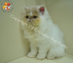 Ericsson Pet Farm Pte Ltd Photos