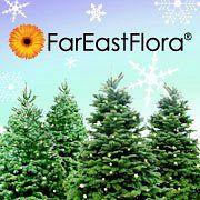 Far East Flora.com Pte Ltd (Goodwood Florist)
