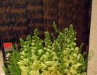 108 Florist Photos