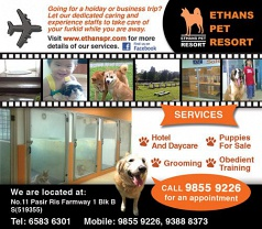 Ethans Pet Resort Photos