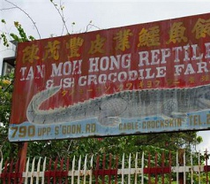 Tan Moh Hong Reptile Skin & Crocodile Farm Photos