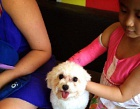 Doggiestyle Cafe Photos