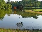 Singapore Botanical Gardens Photos
