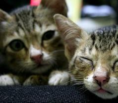 The Animal Doctors Pte Ltd Photos