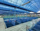 Nippon Koi Farm Pte Ltd Photos