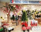 Ming Sing Flowers Pte Ltd Photos