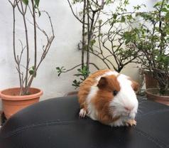 Lavish Pet Photos