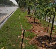 Evergreen Landscape & Construction Pte Ltd Photos