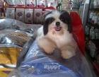 De'Chruse Pet Center Photos