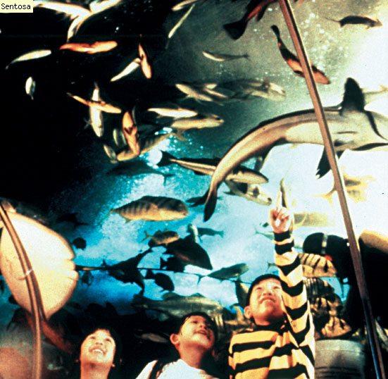 Underwater world travellator tunnel