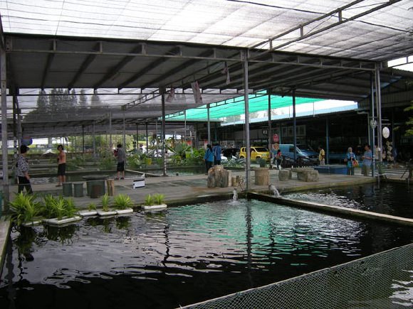Main View of Mainland Tropical Fish Farm Building Image
