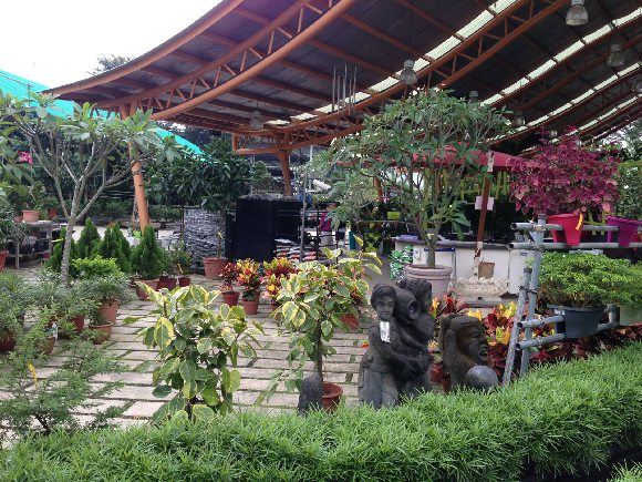 Island Landscape Nursery Pte Ltd